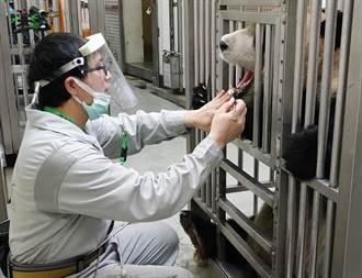 保育员戴面罩就认不得 大猫熊「团团」秒定格露吃惊表情