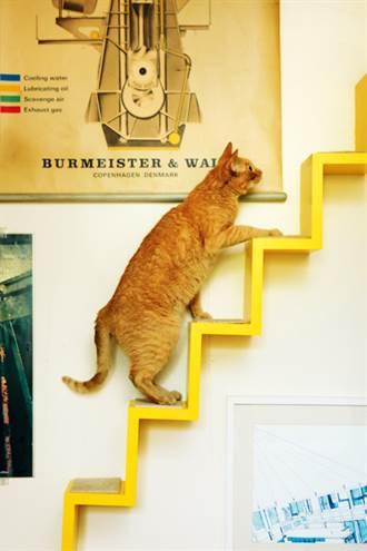 讀懂貓咪的肢體語言 為什麼有些貓會跑去水龍頭底下舔水呢?