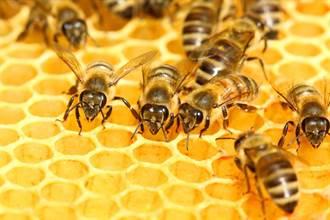 蜜蜂想喝汽水自己開 2隻合力轉開瓶蓋網驚呼