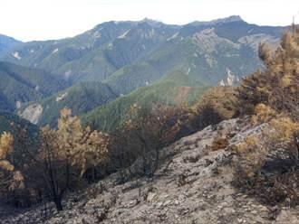 玉山林火延燒12日今終熄滅 林務局:對肇事者絕不寬貸