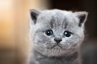 糊塗飼主關門忘了貓 3坨毛球走廊罰站1小時 感覺快哭了