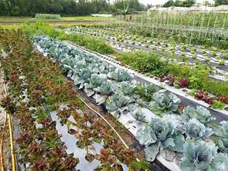 防疫蔬果箱 在家也能輕鬆吃到有機或產銷履歷蔬果
