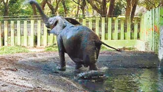 壽山動物園休園 明年10月迎客