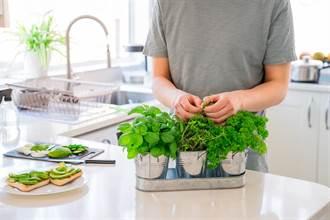 簡易風水布置法 3植物旺家又招財