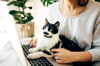 影》在家工作貓咪老愛霸佔筆電?她分享天才秘技百萬人按讚
