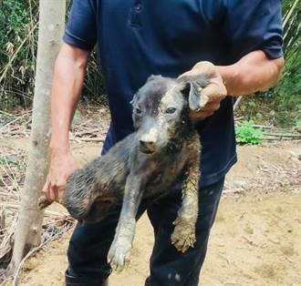 小狗遭土石流活埋 狂挖3小時救出竟毫髮無傷