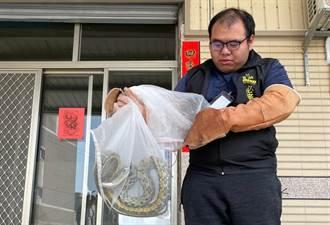 中市抓蛇捕蜂30分鐘內抵達現場 盧秀燕籲勿放生