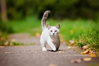 貓咪腳踩小碎步但是「臉完全定格」魔性畫面百萬人笑歪