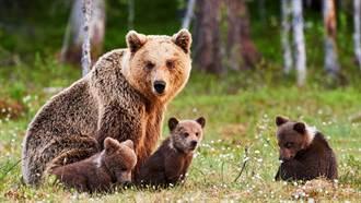17歲少女見3隻棕熊闖入家中  竟「徒手推熊」救愛犬