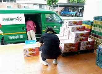 台南山區郵局快捷爆量 芒果上收中心提前2星期開張