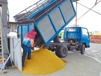 台南溼穀漲成本增 農民嘆利潤有限