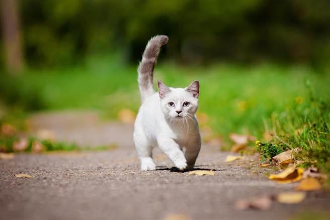 日本一隻貓咪在某種情況下移動時,總是「腳動頭不動」,詭異又魔性的畫面惹笑百萬網友。(示意圖/達志影像)