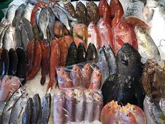 龜吼魚市零接觸不打烊 生鮮漁產便利購
