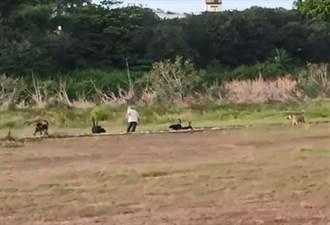 北港老翁公園運動健身 遭流浪狗圍攻送醫