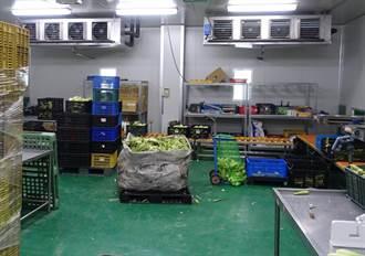 蔬菜產銷壓力大 農糧署徵求短期葉菜截切加工廠商