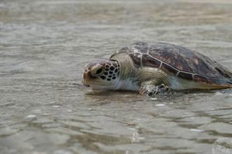 世界海洋日 守護鯨龜