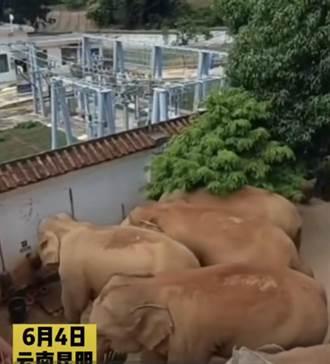 雲南象群進村民家 象鼻擰開水龍頭喝水