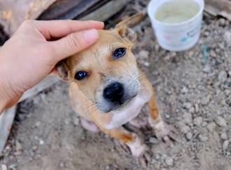 流浪狗乞食沒人理 他餵香腸秒被抱大腿 求收編舉動網落淚