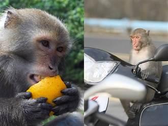 不想住猴子多、機能差宿舍 教授妻訴離敗訴
