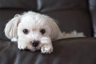 送愛犬結紮被誤取胰臟慘死 主人求負責 獸醫冷回:告我啊