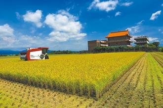 怕彩雲颱風攪局 台南稻農忙收割