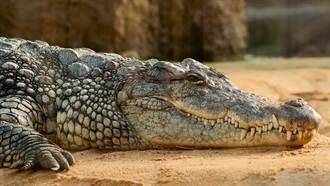 他被2.7公尺鱷魚咬一口 頭骨破裂打34根鋼釘驚悚畫面曝