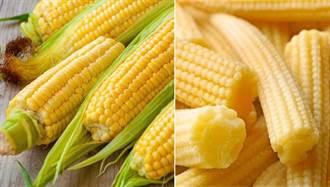 玉米筍長大就是玉米?營養價值大有差異