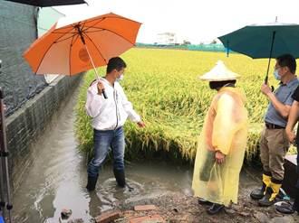 豪雨釀農損 雲林菜園泡水稻田倒伏慘況曝光