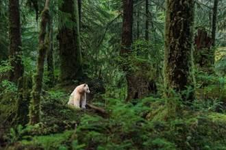 加拿大助力打造野生動植物宜居環境