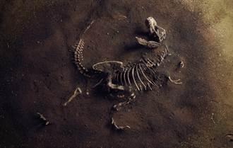 1.8億年前恐龍化石露土面 身長8M保存完整 專家驚呼罕見