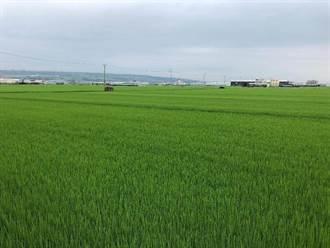 梅雨救旱有功 農水署:高雄二期作預計6月底可供灌