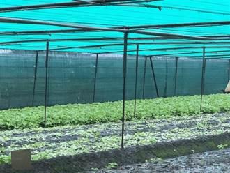 數日豪雨致農災損失逾3700萬 雲林佔3成最嚴重