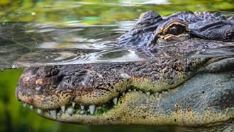 雙胞胎妹妹浮潛遭鱷魚猛咬 她跳下水狂K頭結果超慘