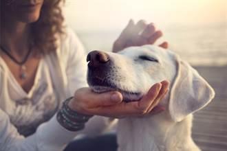 毛孩讀心術》寵物溝通是幻想?溝通師曝內幕:答案要腦補也難