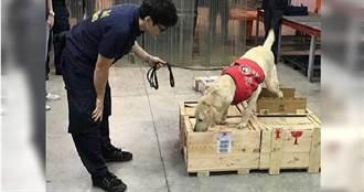 【疫情運毒路】毒郵包闖國門 逾3000公斤毒品原料險遭人頭領走