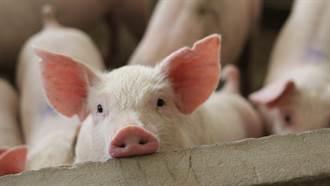 農村驚見「獨眼無鼻」小豬  畸形外貌像異形 眾人驚呆