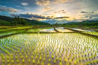 長江上游疑找到4500年前水稻田 專家驚:考古重大發現