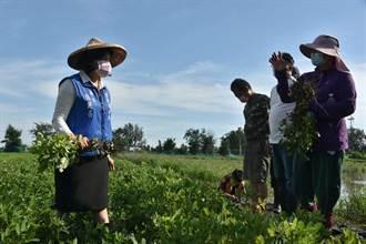 豪雨造成雲林農損近1000萬元 稻穀倒伏最多
