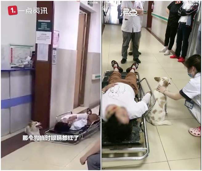 狗狗看到女主人被撞受傷,全程守在她的身旁保護她。(圖/微博@沸點正能量)