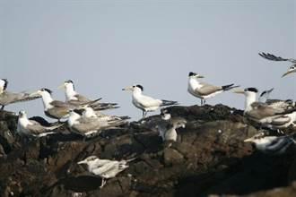 社子岛湿地环境讲座  邀您「线」上找神话之鸟
