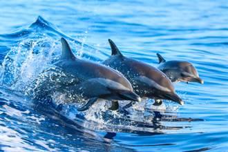 擱淺海豚獲救被載去放生 待船邊不肯走 驚人舉動暖爆漁民