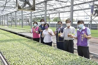 大雨後葉菜漲翻天 蔬菜育苗場卻陷經營困境