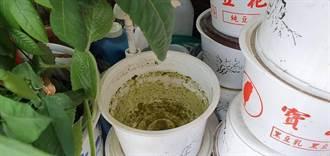 積水容器暴增成病媒蚊孳生溫床 安平、安南3里誘卵桶陽性率逾60%