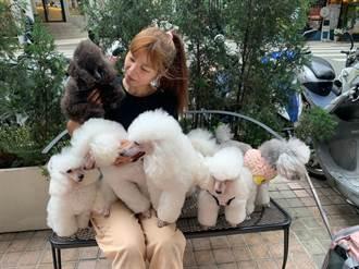 稻江商職寵物經營組瞄準毛經濟 教育局長讚許掌握產業趨勢