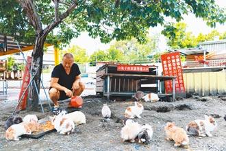 屏東蕭家大院餐廳陷困境 逾200隻兔子恐斷糧