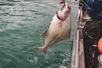 捕到怪獸級比目魚 靠4壯漢才搬得動 曝超巨體型震驚全場