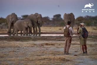 與「象」同行 見證世界規模最大的象群遷徙全紀錄