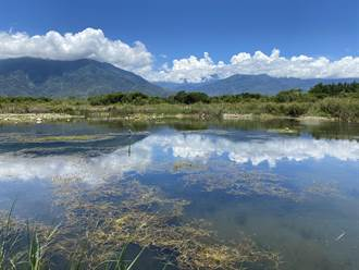 台東池上富興濕地水位少量恢復 原生種仍難存活