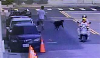 飼主愛車被偷 靈犬跳車「守護車輛」助警逮賊