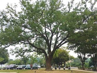 另類線上賞老樹 3部台劇尋覓台南老樹